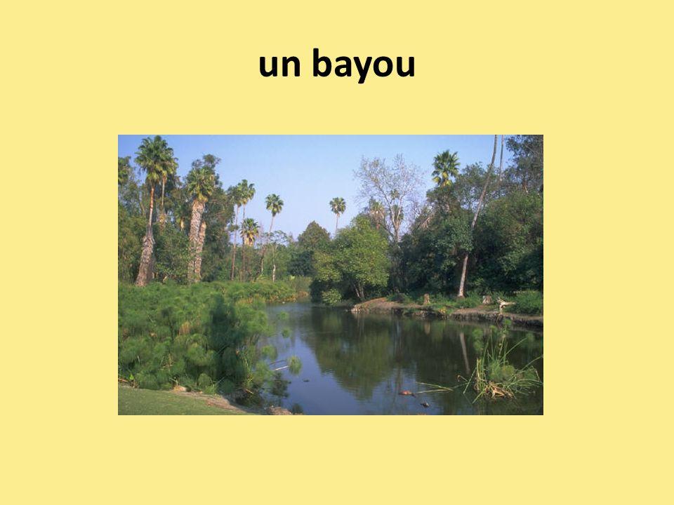 un bayou