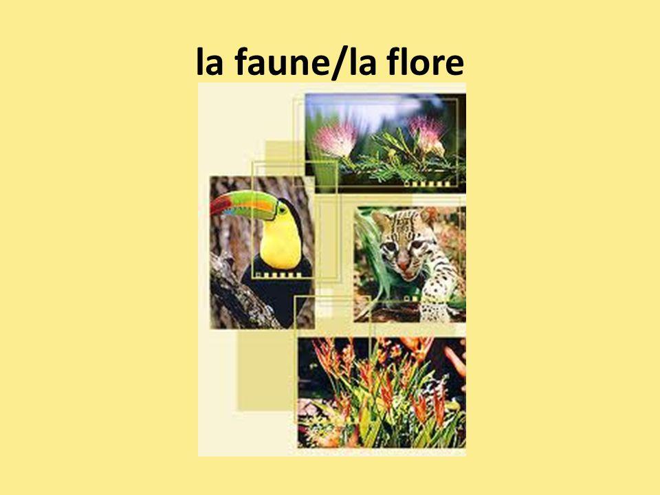 la faune/la flore