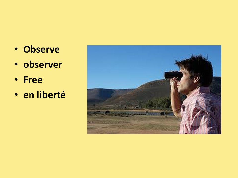 Observe observer Free en liberté
