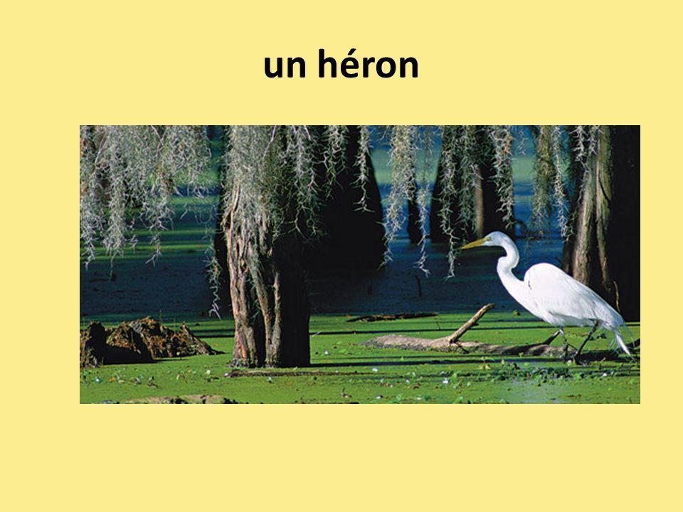 un héron