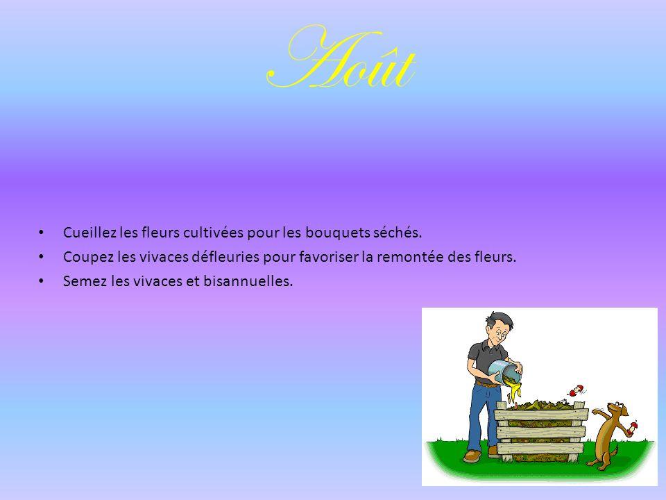 Août Cueillez les fleurs cultivées pour les bouquets séchés.