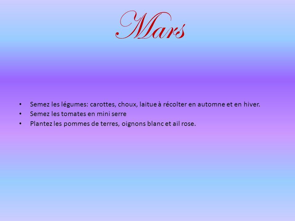Mars Semez les légumes: carottes, choux, laitue à récolter en automne et en hiver.