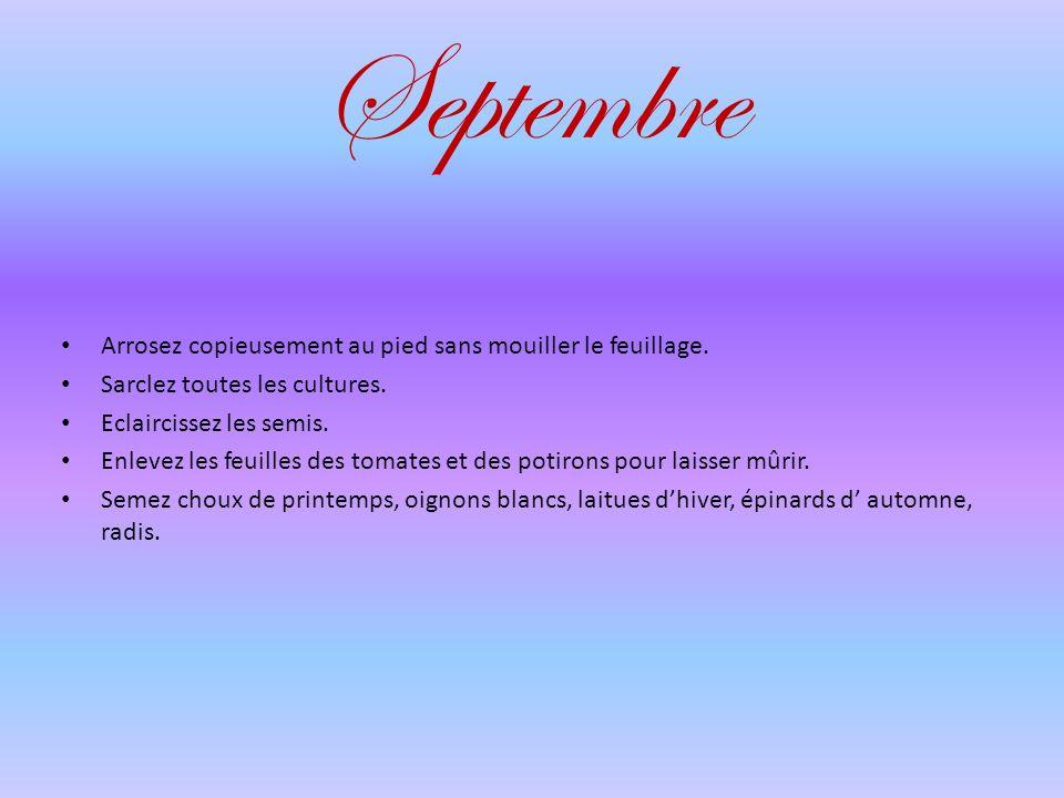 Septembre Arrosez copieusement au pied sans mouiller le feuillage.