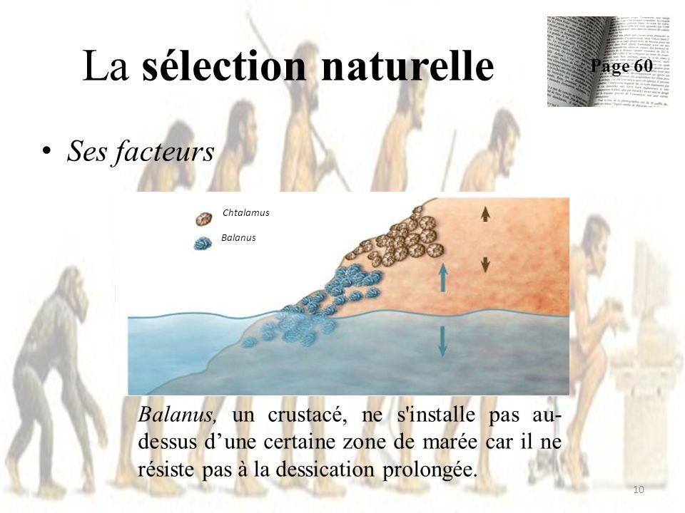 Ses facteurs La sélection naturelle Page 60 10 Chtalamus Balanus Balanus, un crustacé, ne s installe pas au- dessus dune certaine zone de marée car il ne résiste pas à la dessication prolongée.