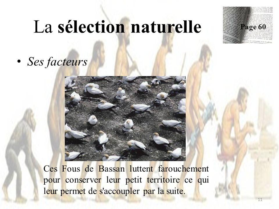 Ses facteurs La sélection naturelle Page 60 11 Ces Fous de Bassan luttent farouchement pour conserver leur petit territoire ce qui leur permet de s accoupler par la suite.