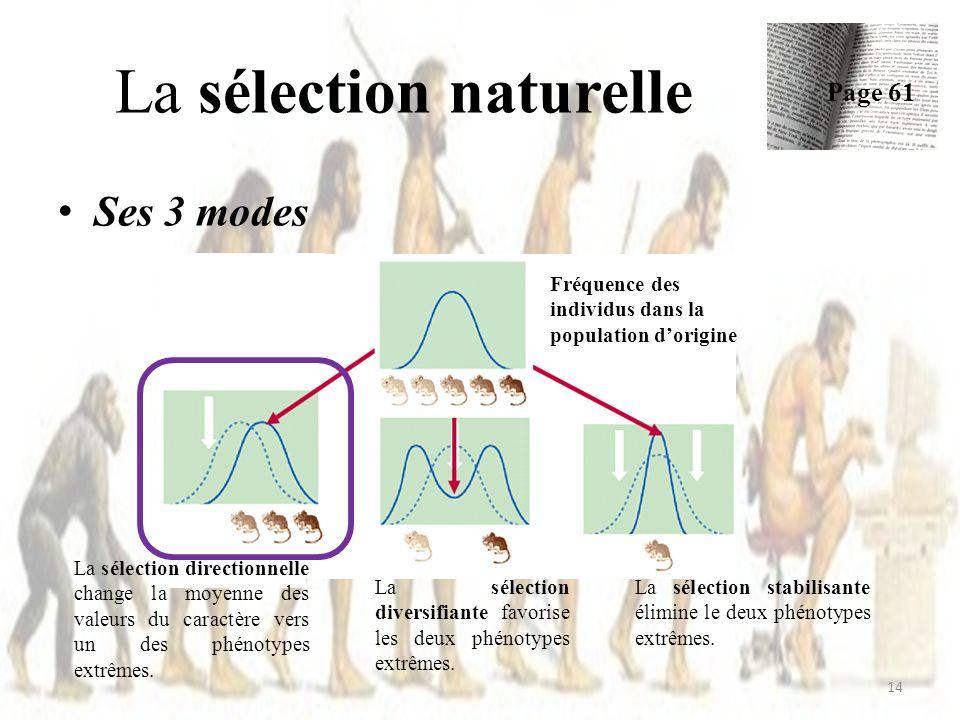 Ses 3 modes La sélection naturelle Page 61 14 La sélection directionnelle change la moyenne des valeurs du caractère vers un des phénotypes extrêmes.