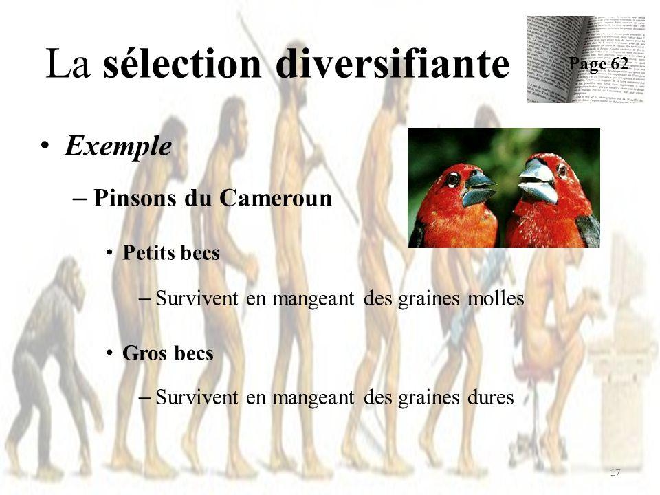 Exemple – Pinsons du Cameroun Petits becs – Survivent en mangeant des graines molles Gros becs – Survivent en mangeant des graines dures La sélection diversifiante Page 62 17