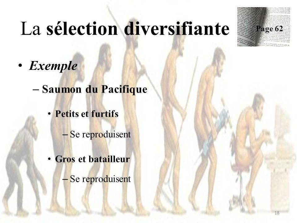 Exemple – Saumon du Pacifique Petits et furtifs – Se reproduisent Gros et batailleur – Se reproduisent La sélection diversifiante Page 62 18