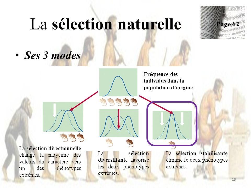Ses 3 modes La sélection naturelle Page 62 19 La sélection directionnelle change la moyenne des valeurs du caractère vers un des phénotypes extrêmes.