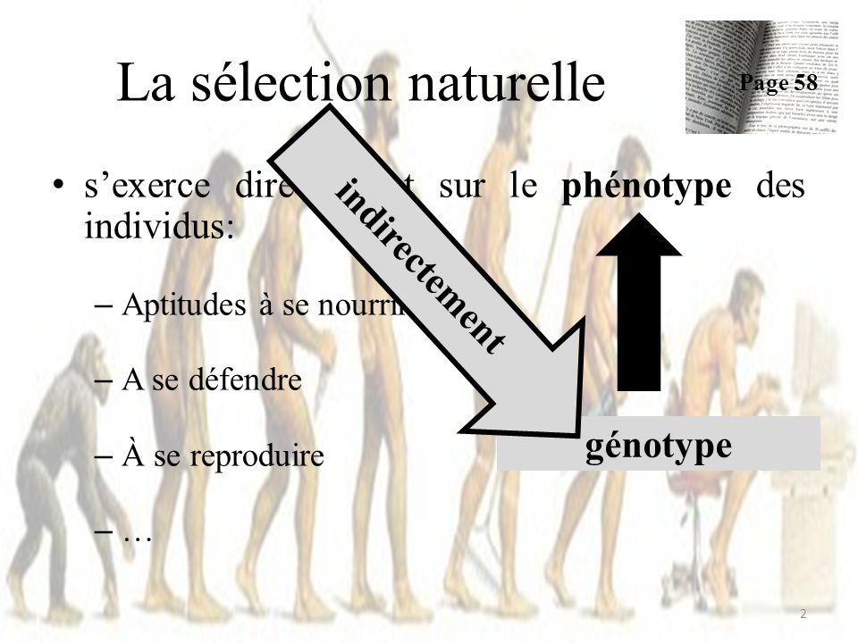 sexerce directement sur le phénotype des individus: – Aptitudes à se nourrir – A se défendre – À se reproduire –…–… La sélection naturelle Page 58 2 génotype indirectement