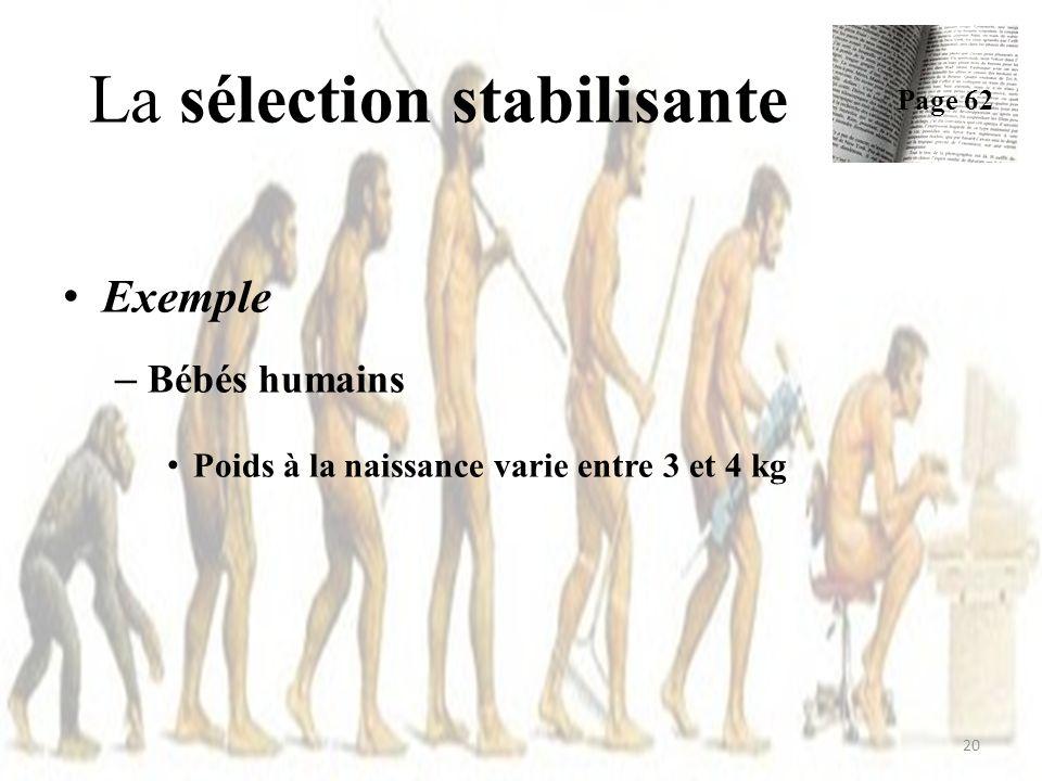 Exemple – Bébés humains Poids à la naissance varie entre 3 et 4 kg La sélection stabilisante Page 62 20