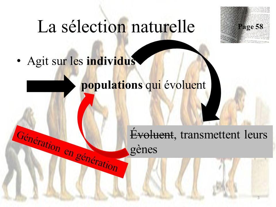 Agit sur les individus populations qui évoluent Exemple: La sélection naturelle Page 58 4 Agrostis « ordinaires » Agrostis « résistants » aux métaux toxiques