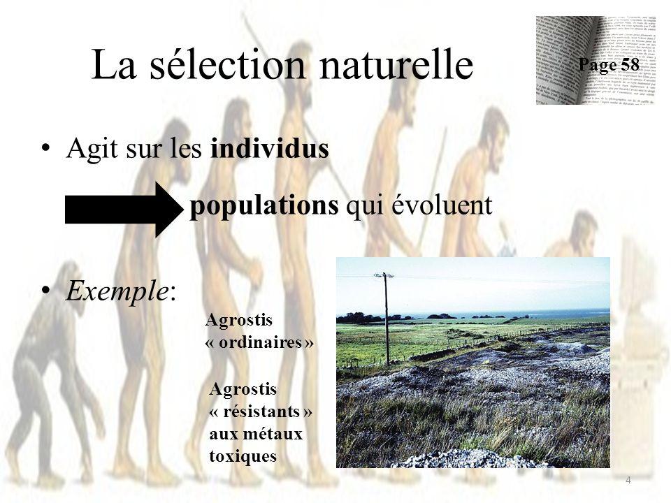 Exemple – Pinsons des îles Galápagos Années sèches – Graines sont rares – Pinsons choisissent les grosses graines survivre – Gros becs sont favorisés reproduction transmission des gènes.