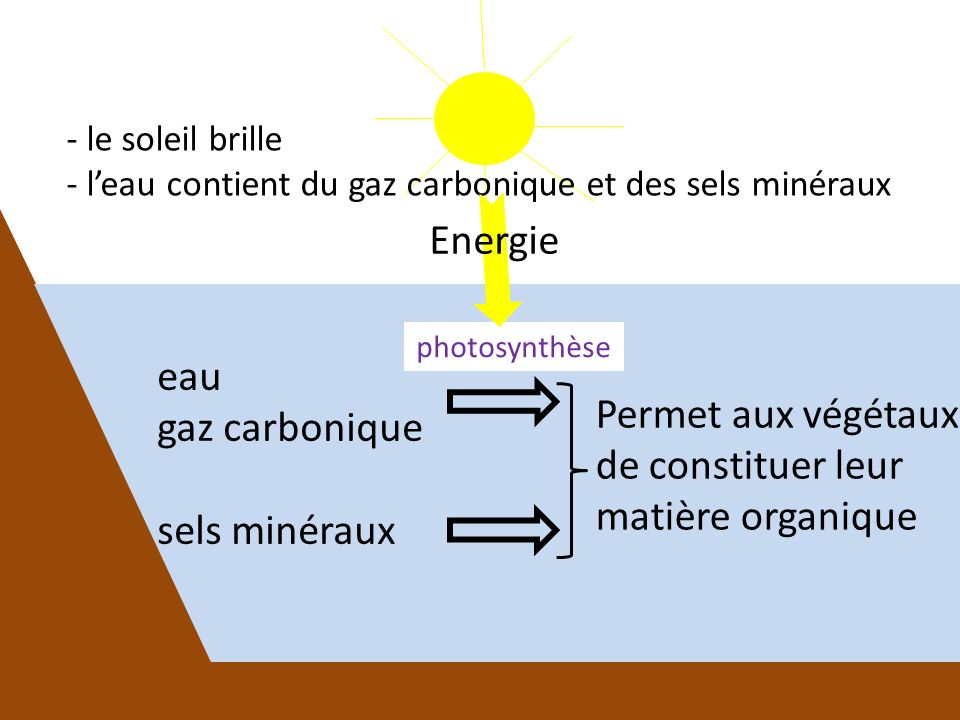 - le soleil brille - leau contient du gaz carbonique et des sels minéraux Permet aux végétaux de constituer leur matière organique eau gaz carbonique sels minéraux photosynthèse Energie
