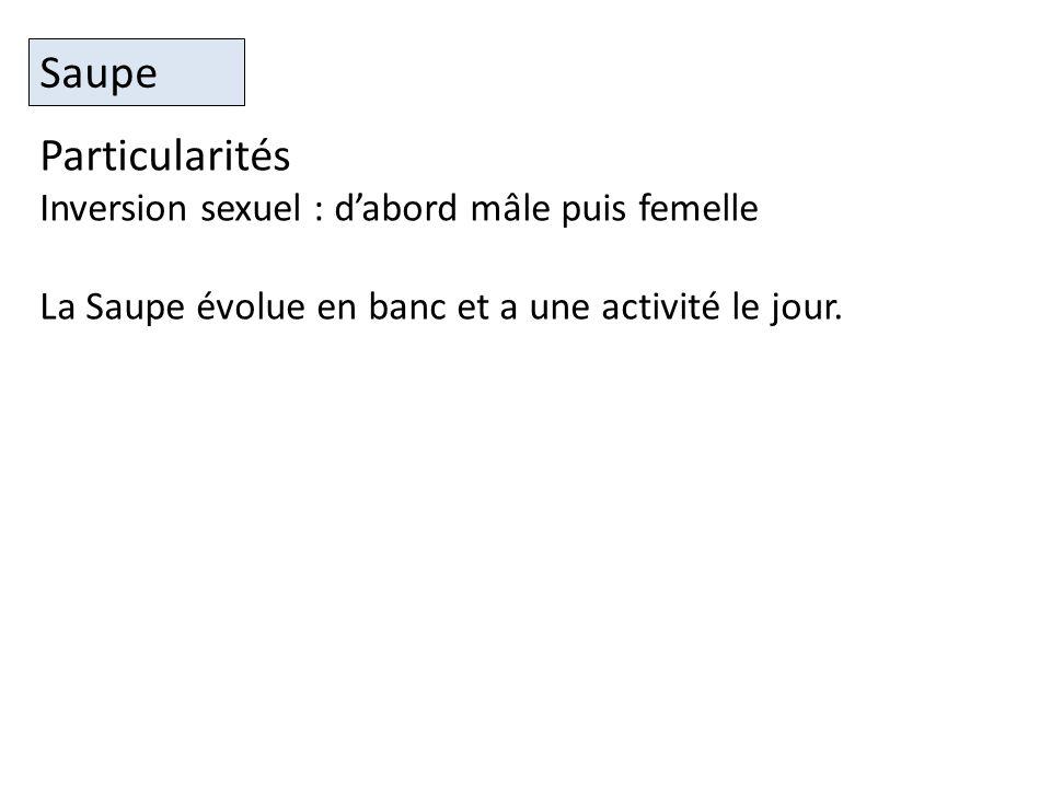 Particularités Inversion sexuel : dabord mâle puis femelle La Saupe évolue en banc et a une activité le jour.