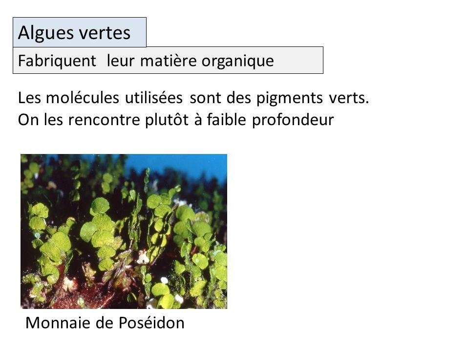Algues vertes Les molécules utilisées sont des pigments verts.
