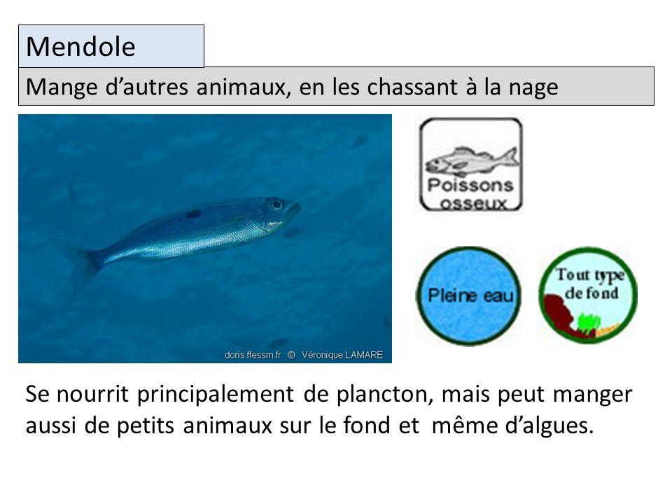 Mange dautres animaux, en les chassant à la nage Mendole Se nourrit principalement de plancton, mais peut manger aussi de petits animaux sur le fond et même dalgues.