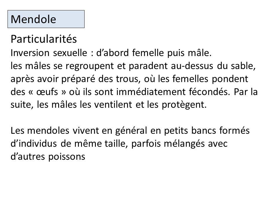 Particularités Inversion sexuelle : dabord femelle puis mâle.