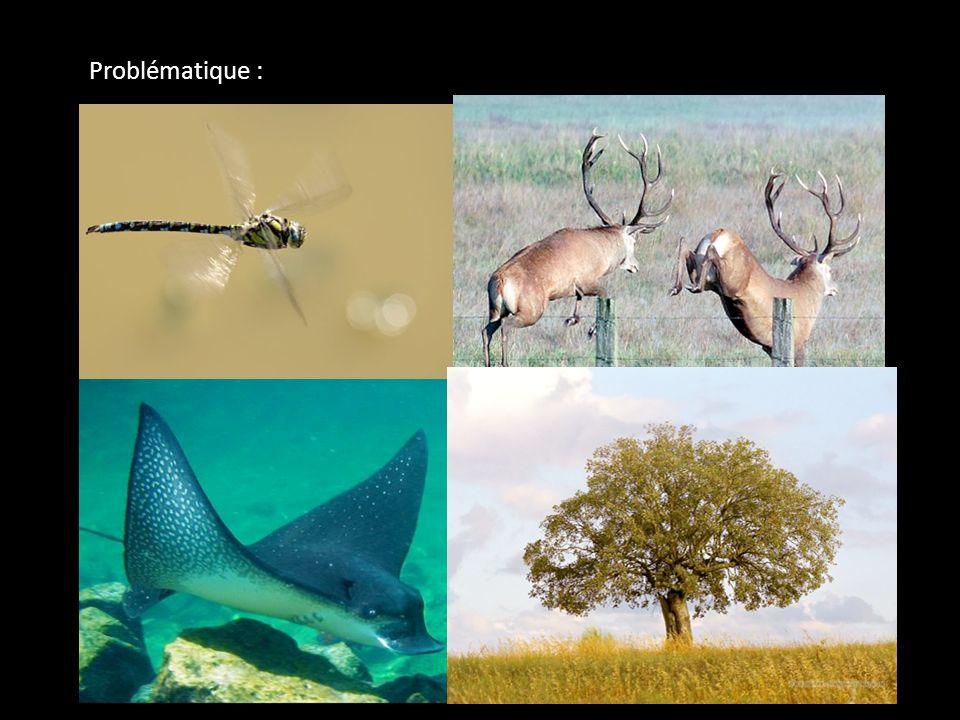 II- La circulation de matière dans la plante xylème phloème