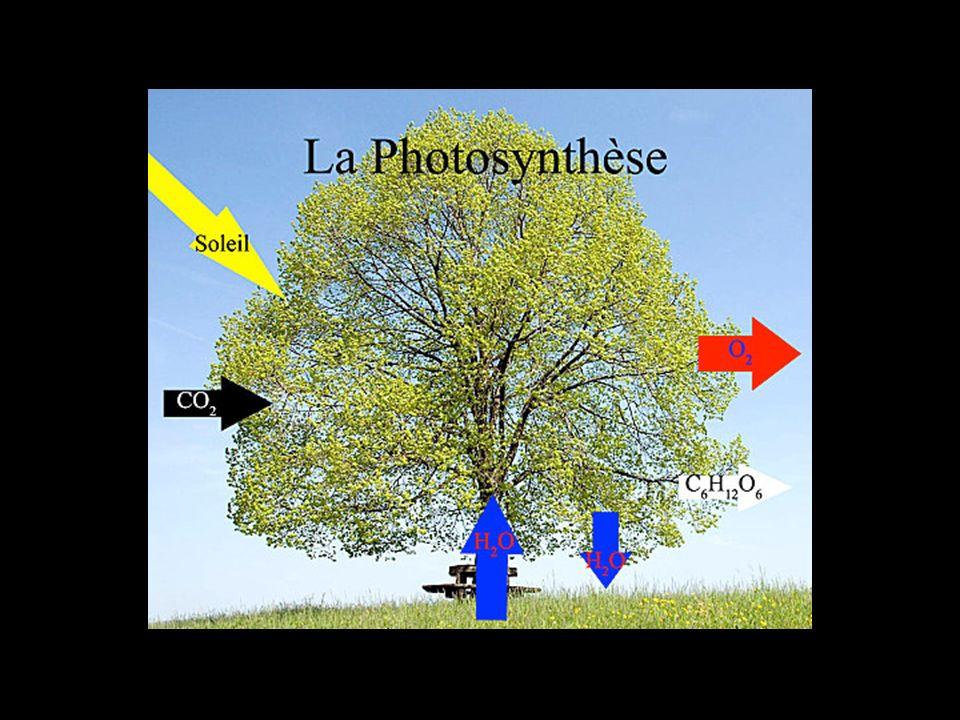 Thème 1A5 : Relations organisation /mode de vie Lexemple de la vie fixée chez les plantes Thème 1A5 : Relations organisation /mode de vie Lexemple de la vie fixée chez les plantes I- Les échanges entre la plante et son milieu 1) Les échanges plante / atmosphère Ch I : Organisation des plantes à fleurs