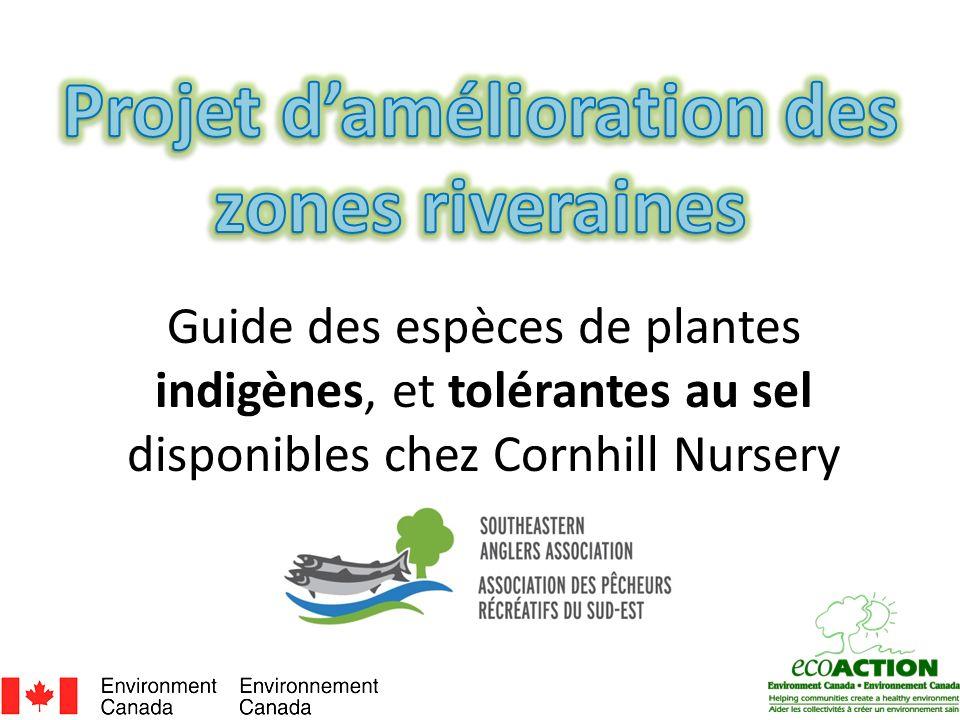 Guide des espèces de plantes indigènes, et tolérantes au sel disponibles chez Cornhill Nursery