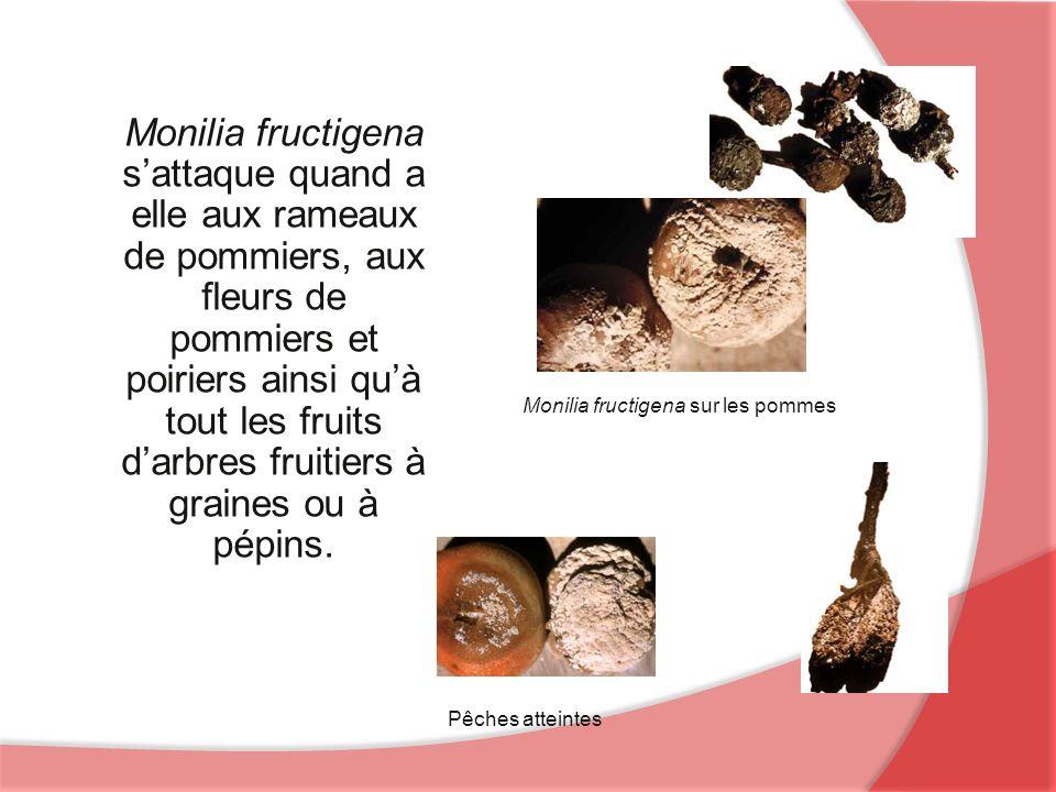 Monilia fructigena sattaque quand a elle aux rameaux de pommiers, aux fleurs de pommiers et poiriers ainsi quà tout les fruits darbres fruitiers à graines ou à pépins.