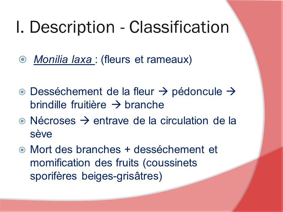 I. Description - Classification Monilia laxa : (fleurs et rameaux) Desséchement de la fleur pédoncule brindille fruitière branche Nécroses entrave de