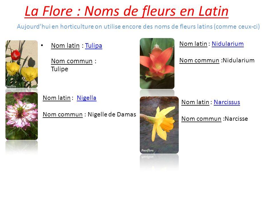 La Flore : Noms de fleurs en Latin Nom latin : Tulipa Nom commun : TulipeTulipa Nom latin : Nigella Nom commun : Nigelle de DamasNigella Nom latin : N