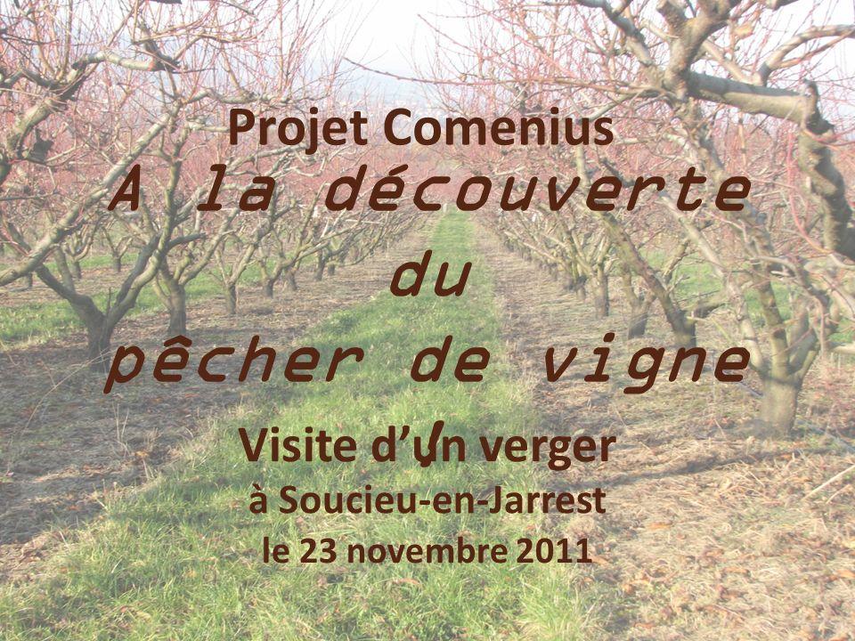 Projet Comenius A la découverte du pêcher de vigne ! Visite dun verger à Soucieu-en-Jarrest le 23 novembre 2011