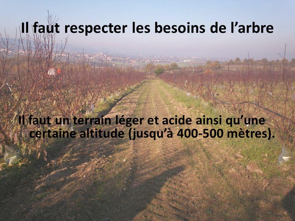 Il faut respecter les besoins de larbre Il faut un terrain léger et acide ainsi quune certaine altitude (jusquà 400-500 mètres).