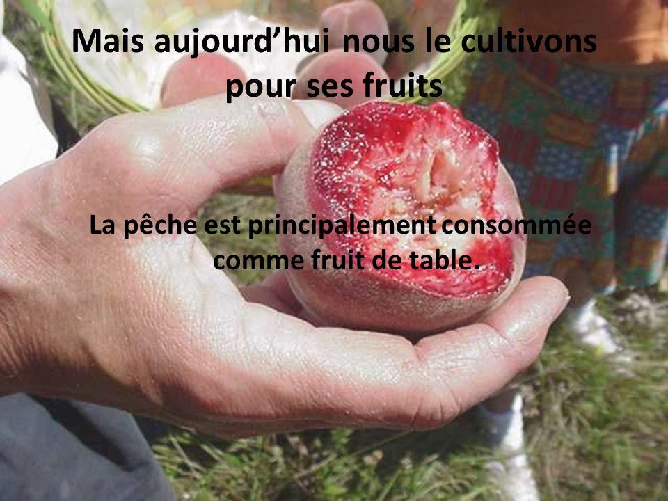 Mais aujourdhui nous le cultivons pour ses fruits La pêche est principalement consommée comme fruit de table.