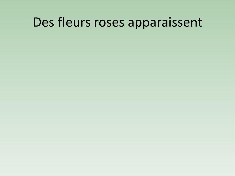 Des fleurs roses apparaissent