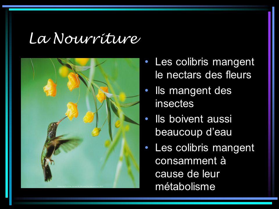 La Nourriture Les colibris mangent le nectars des fleurs Ils mangent des insectes Ils boivent aussi beaucoup deau Les colibris mangent consamment à cause de leur métabolisme