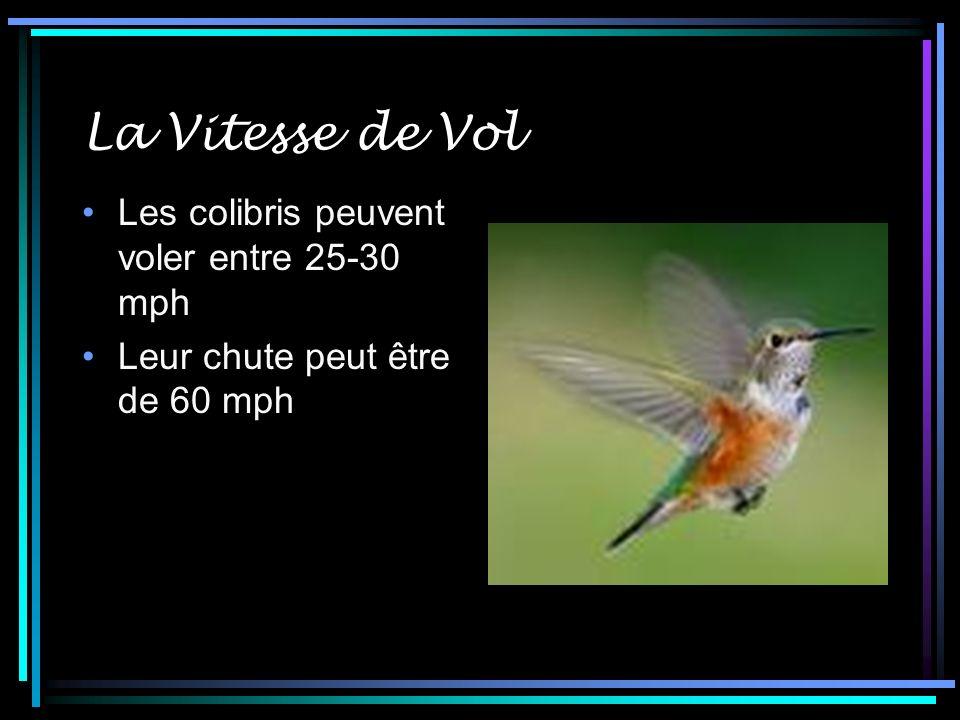 La Vitesse de Vol Les colibris peuvent voler entre 25-30 mph Leur chute peut être de 60 mph