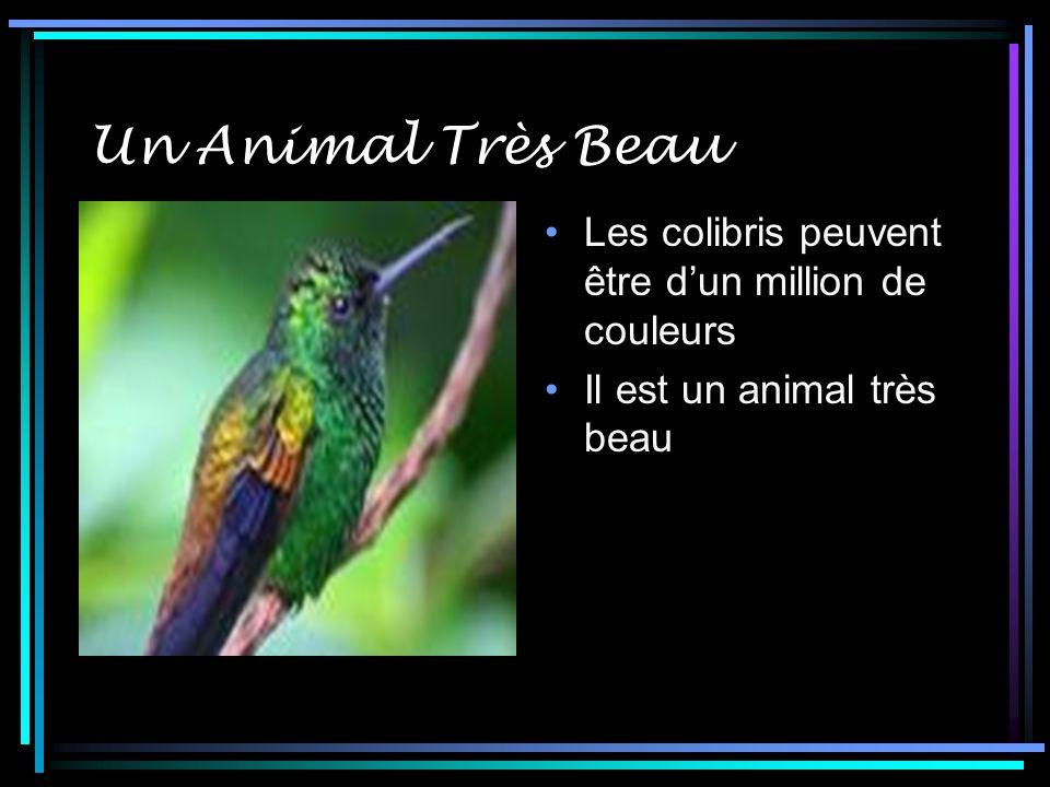 Un Animal Très Beau Les colibris peuvent être dun million de couleurs Il est un animal très beau
