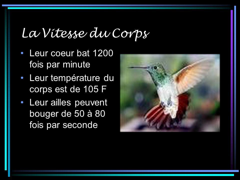 La Vitesse du Corps Leur coeur bat 1200 fois par minute Leur température du corps est de 105 F Leur ailles peuvent bouger de 50 à 80 fois par seconde
