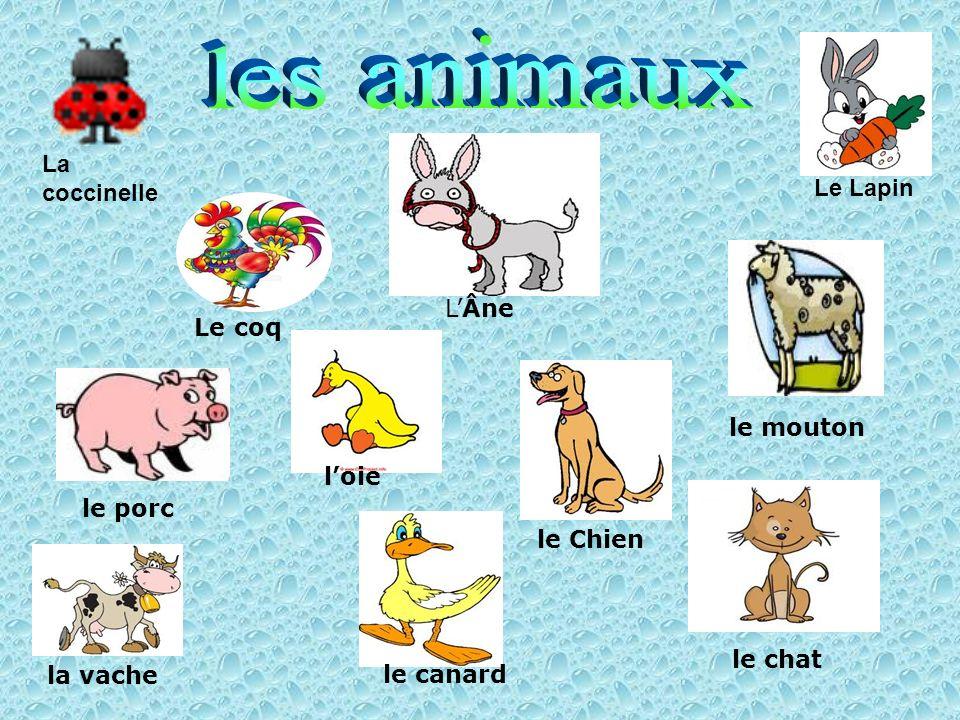 LÂne le porc le canard le chat le mouton le Chien loie Le coq Le Lapin la vache La coccinelle