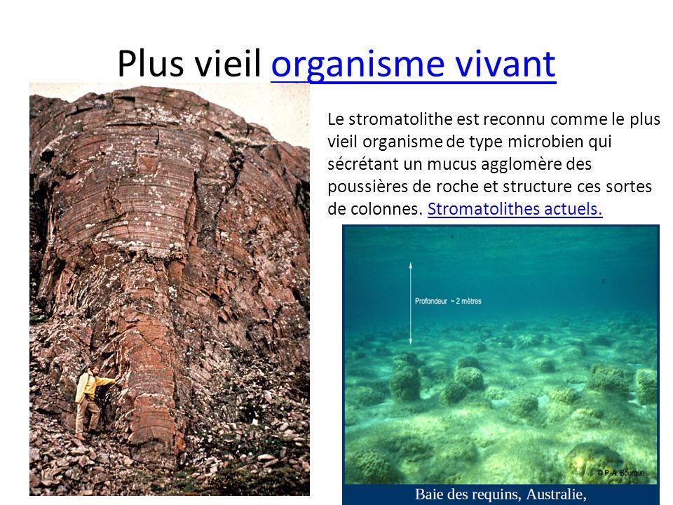 Plus vieil organisme vivantorganisme vivant Le stromatolithe est reconnu comme le plus vieil organisme de type microbien qui sécrétant un mucus agglom