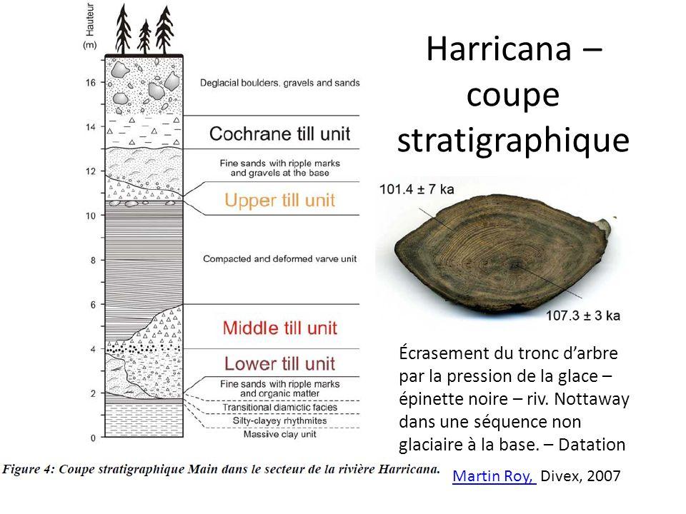 Harricana – coupe stratigraphique Martin Roy, Martin Roy, Divex, 2007 Écrasement du tronc darbre par la pression de la glace – épinette noire – riv. N
