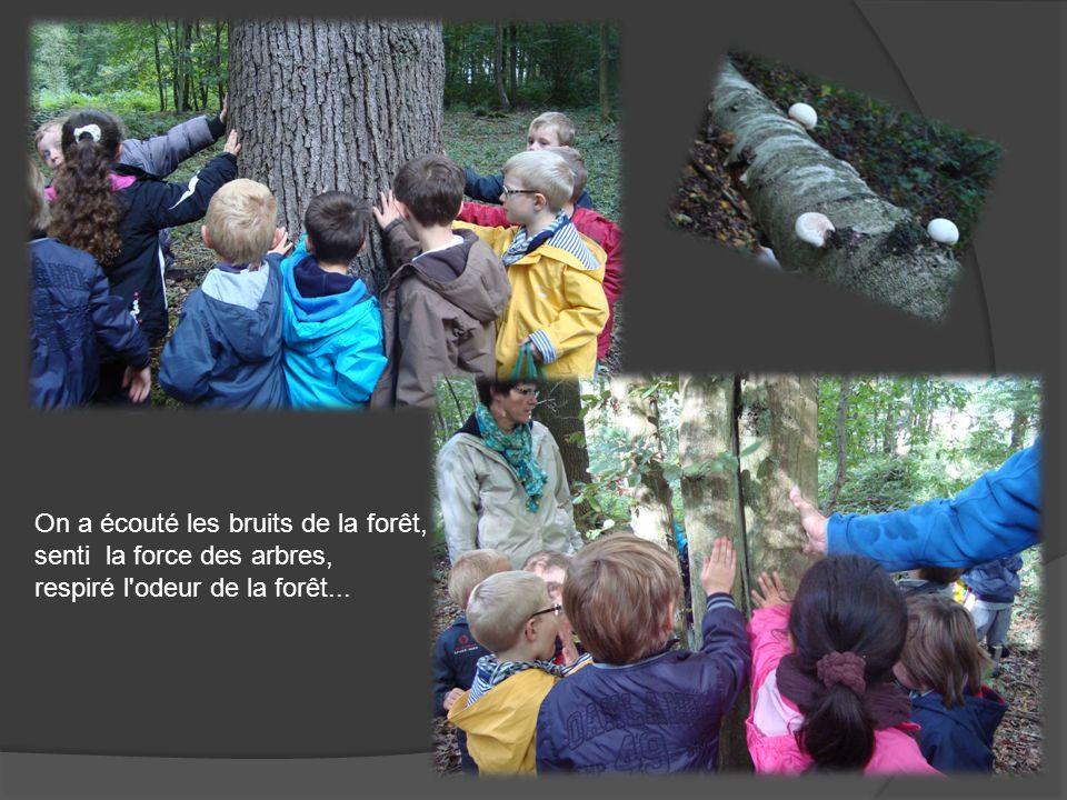 On a écouté les bruits de la forêt, senti la force des arbres, respiré l'odeur de la forêt...