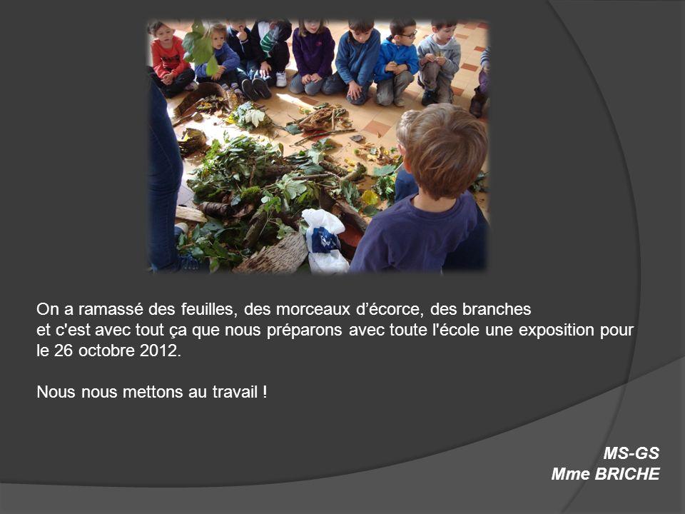 On a ramassé des feuilles, des morceaux décorce, des branches et c'est avec tout ça que nous préparons avec toute l'école une exposition pour le 26 oc