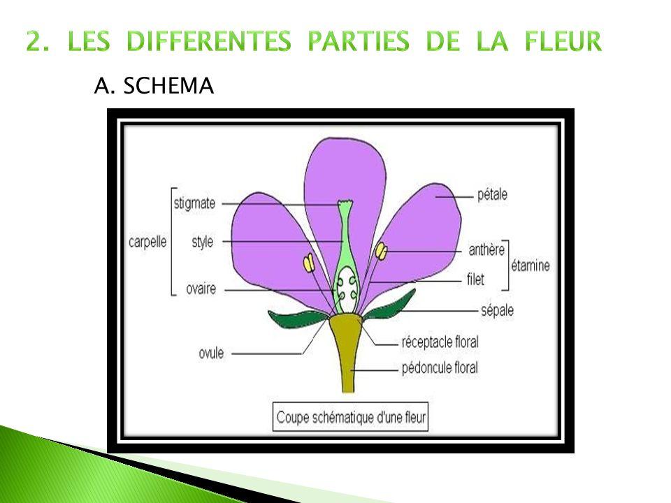 A. SCHEMA