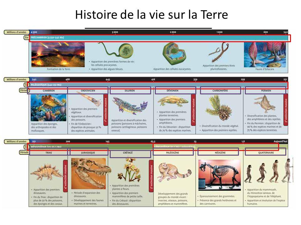 Ère 4 : Cénozoïque o Géologie : Les continents continuent leur dérive jusquà la formation des continents et océans daujourdhui.