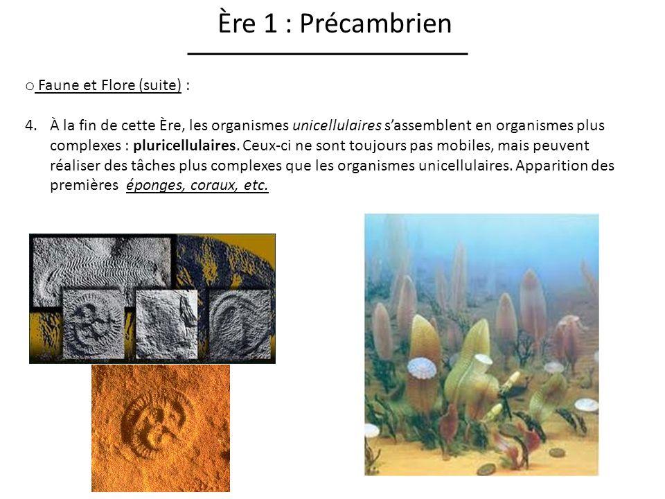 Ère 2 : Paléozoïque