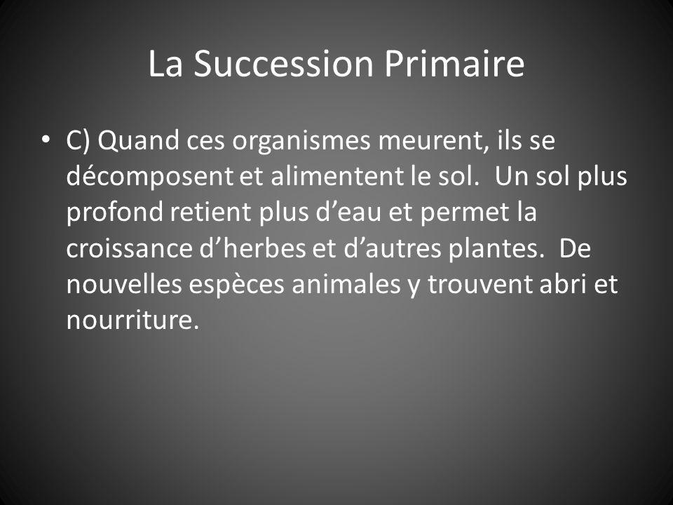 La Succession Primaire C) Quand ces organismes meurent, ils se décomposent et alimentent le sol.