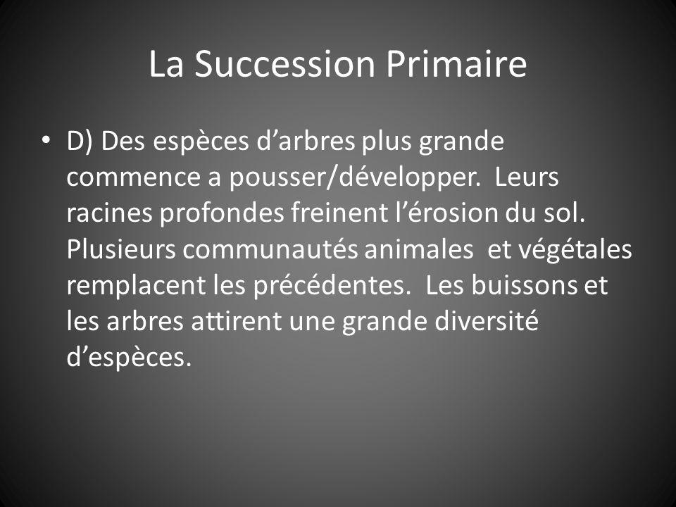 La Succession Primaire D) Des espèces darbres plus grande commence a pousser/développer.