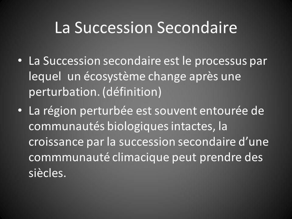 La Succession Secondaire La Succession secondaire est le processus par lequel un écosystème change après une perturbation.