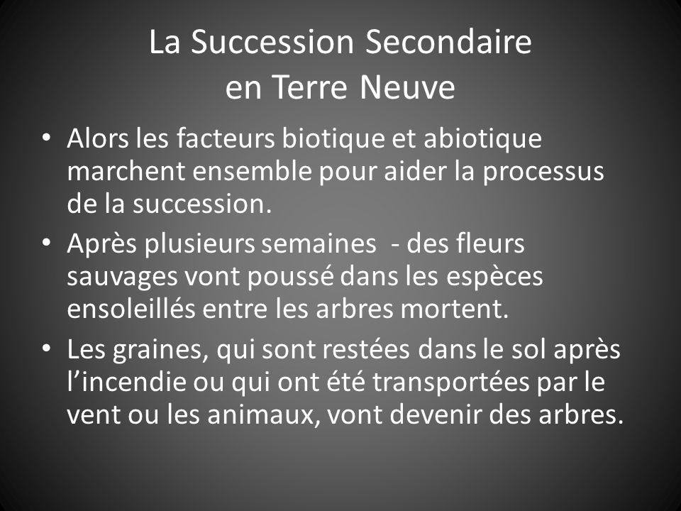 La Succession Secondaire en Terre Neuve Alors les facteurs biotique et abiotique marchent ensemble pour aider la processus de la succession.
