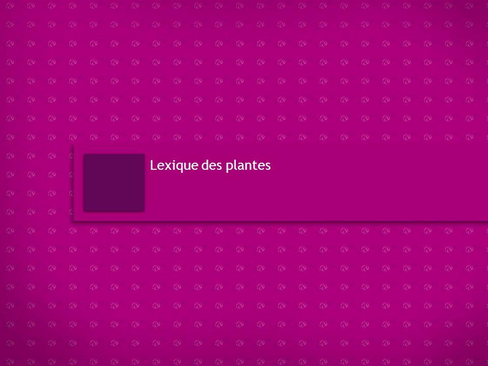 Navigation LEXIQUE DES ANIMAUX Accès rapide Descriptif et explication du module : Bienvenue dans le lexique des animaux Villaverde.