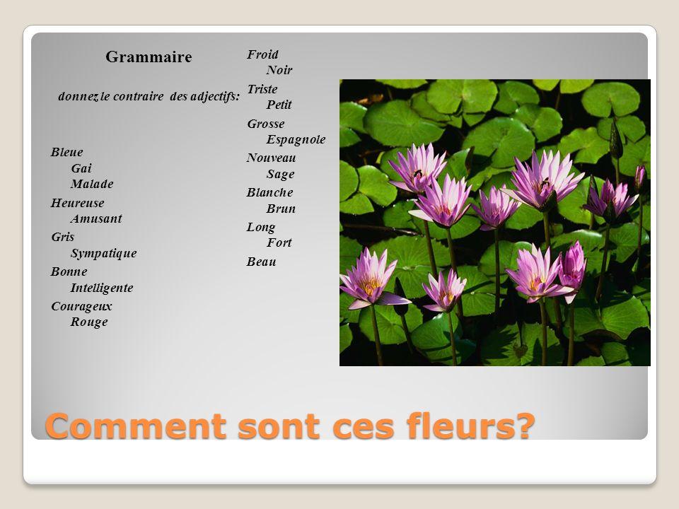 Comment sont ces fleurs? Grammaire donnez le contraire des adjectifs: Bleue Gai Malade Heureuse Amusant Gris Sympatique Bonne Intelligente Courageux R